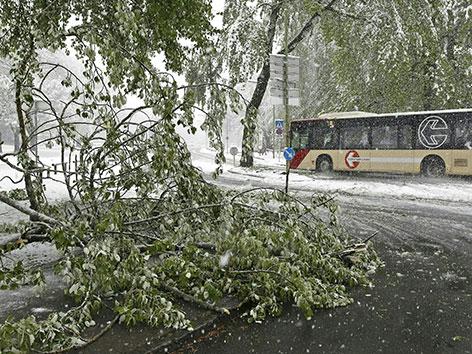 Stadtwerke Bus vor abgebrochenenÄsten
