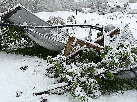 Wintereinbruch Schäden Landwirtschaft