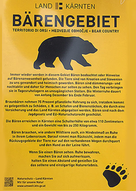 Bär Sichtung Jungbär Goldeck