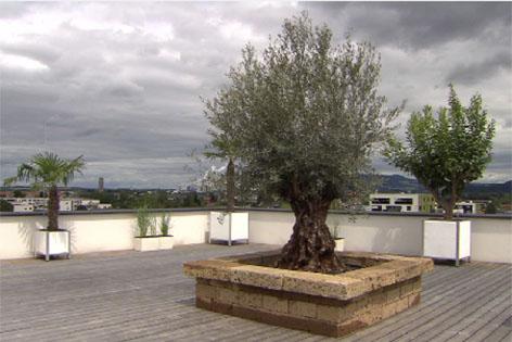 Mediterrane Mietpflanzen