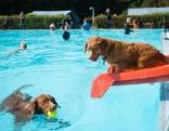 Zwei Hunde in einem Schwimmbad