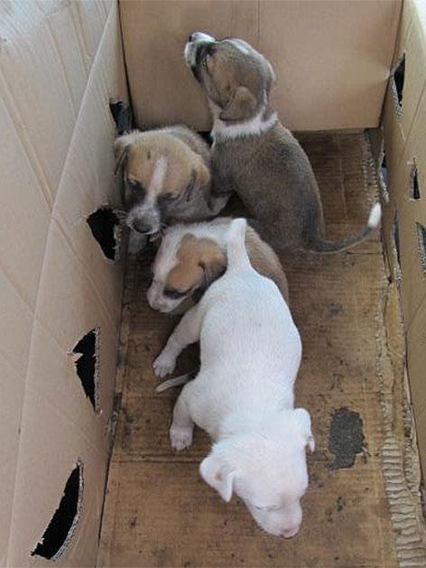 Beschlagnahmte Hundewelpen