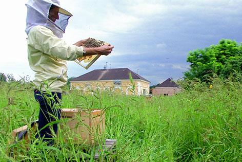 Imkerin auf Feld mit Bienenwabe in der Hand
