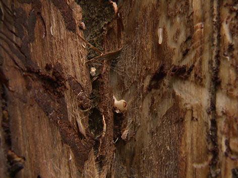 Borkenkäfer Befall Wald Forstbehörde