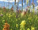 Reise zu Duft und Farben - Blumen Wiese