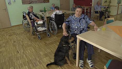 Hund Heim Tierheim Begleiter Altenheim Nikitsch