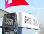 Flugpersonal mit Hunde-Transportkorb bei einem Flugzeug