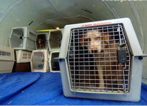 Flugbox für Hund in einem Frachtraum