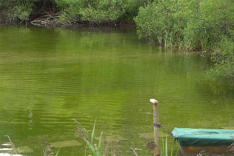 Lunzer See mit grüner Farbe