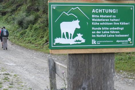 Warnschild Kühe