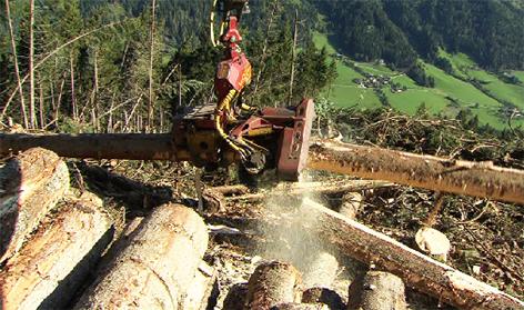 Holz Windwurf Bundesforste Wald