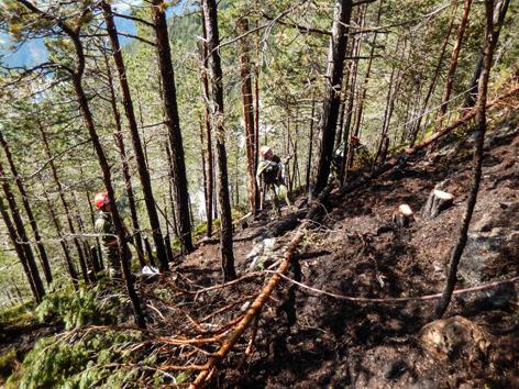Angeseilte Feuerwehrmänner bei Waldbrand in steilem Wald
