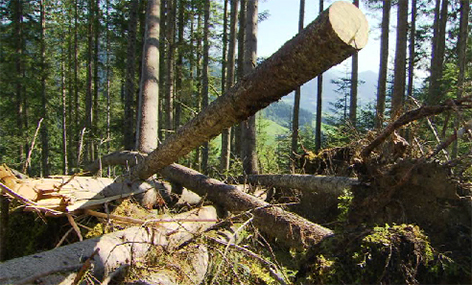 Windwurf Wald Bundesforste Holz Bruchholz