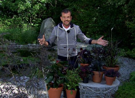 Karl Ploberger im Fernsehgarten mit seinen schwarzen Pflanzen