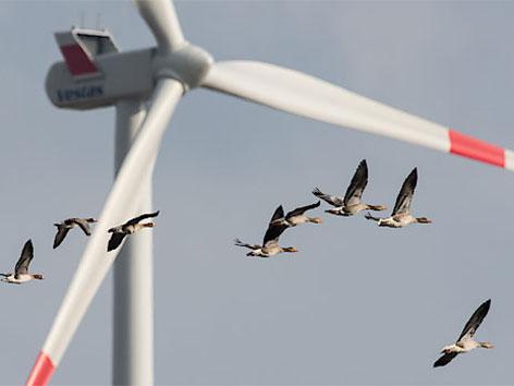 Windrad Gänse Klimaschutz
