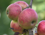 Obst- und Gartenbauverein Obstbörse