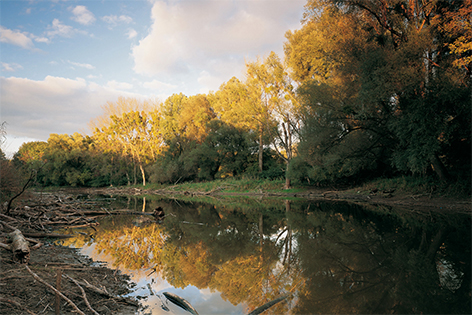 Nationalpark Donau Auen im Herbst