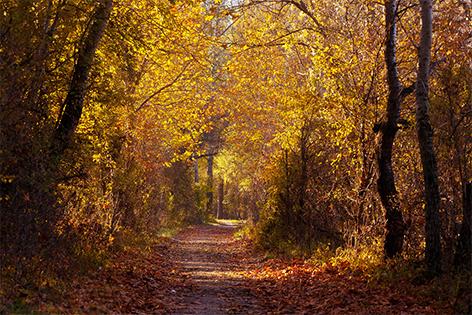 Nationalpark Donau Auen Herbststimmung Wald
