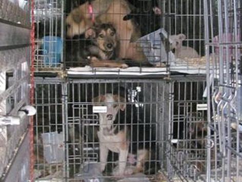 Transporter mit Hunden und Katzen