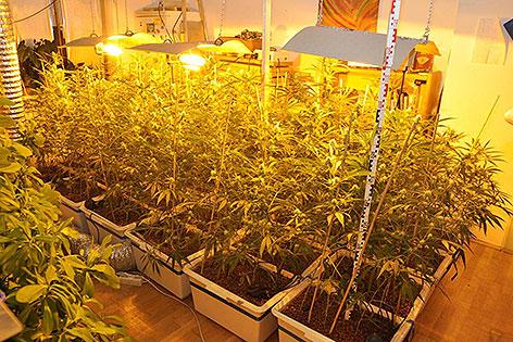 Cannabisplantage in Wohnung in Favoriten