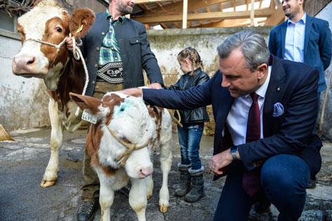 Hofer Besuch Tirol Kalb Kuh