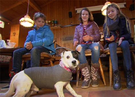 Therapiehund Hund und Kind Kinder Trainer Kurs