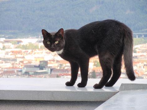 Schwarzer Kater auf einer Terrasse