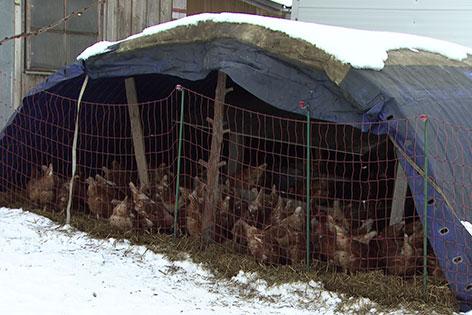 Selbstgebauter Unterstand mit Hühnern