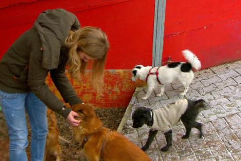 Kristin Müller mit Hunden