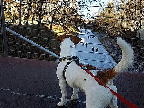 Lendkanal Eislaufen