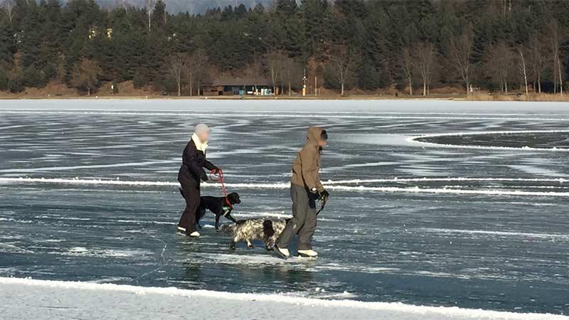 Silbersee Villach Eislaufen Hund