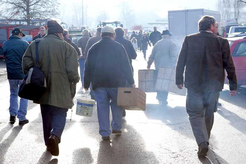 Aussteller bringen ihre Tierer zum Welser Glanglmarkt