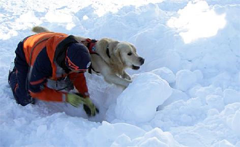 Bergrettung Suchhund Lawinenhund Bergrettungshund Bergretter Hundeführer Lawine