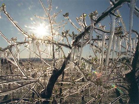 Frost, Kälte