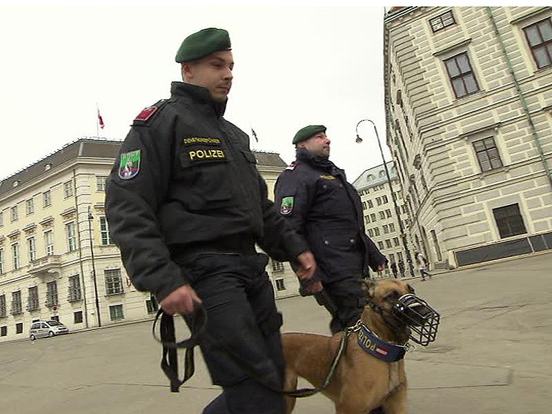 Polizei-Hunde