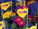 Blumenverteilaktion ORF Valentinstag Sankt Pölten