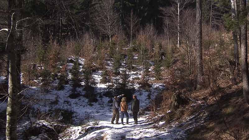 Aufgezeigt Wildverbiss Wald