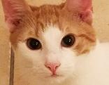 Kleine Katze in Hallein-Neualm vermisst
