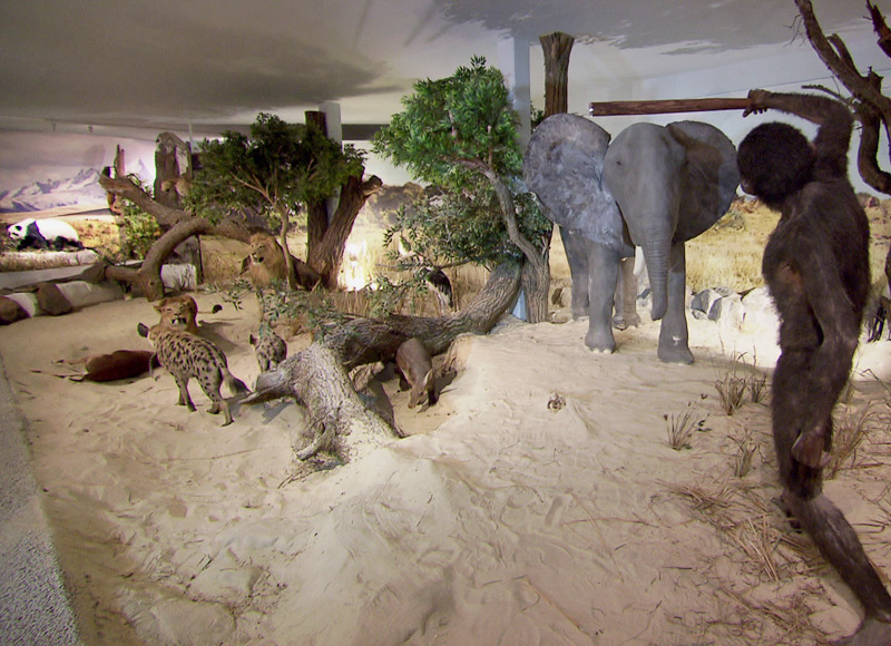 Evolutionsmuseum in Krenglbach