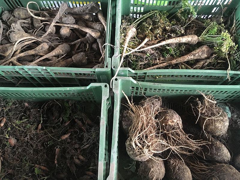 Kooperative Landwirtschaft