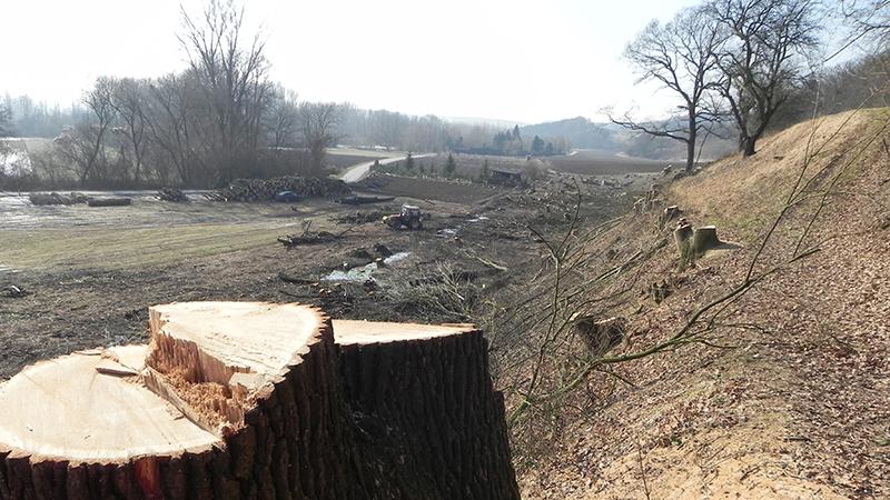 Kahlschlag Naturerholungsgebiet Wimpassing