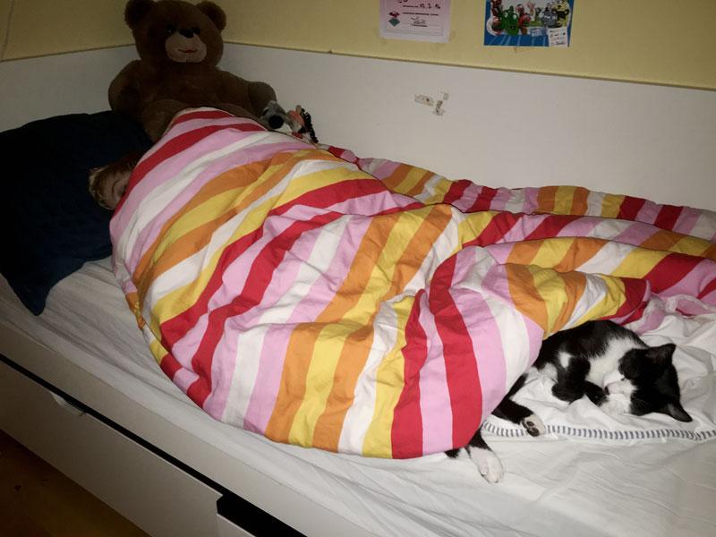 Katze liegt im Kinderzimmer im Bett