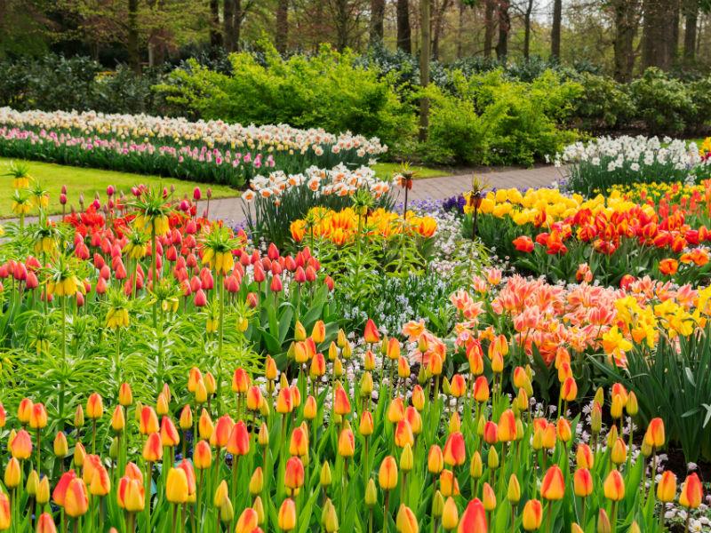 Wiese mit Blumenzwiebeln