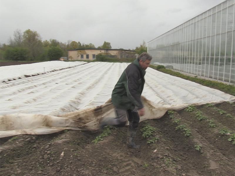 Gemüsebauer schützt Pflanzen mit Vlies