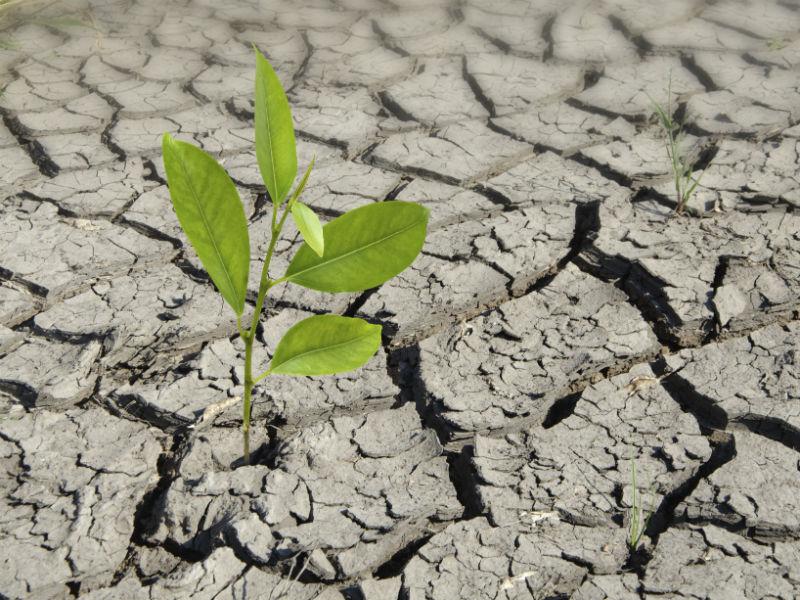 Pflanze auf duerrem Boden