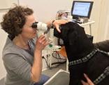 Tierärztin Vera Neun bei der Untersuchung eines Hundes
