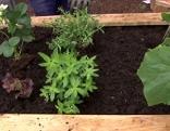 Tischbeet mit Pflanzen