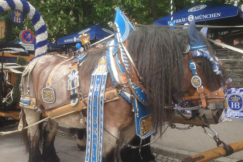"""Pferd Kaltblüter """"Pauli"""""""