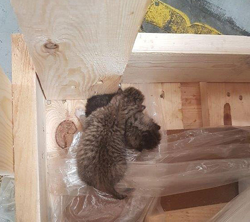 Katzenbabys in Lieferung aus Polen entdeckt