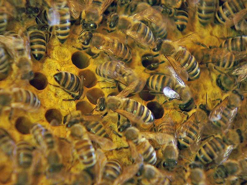 SSC Api Tourismus Bienen